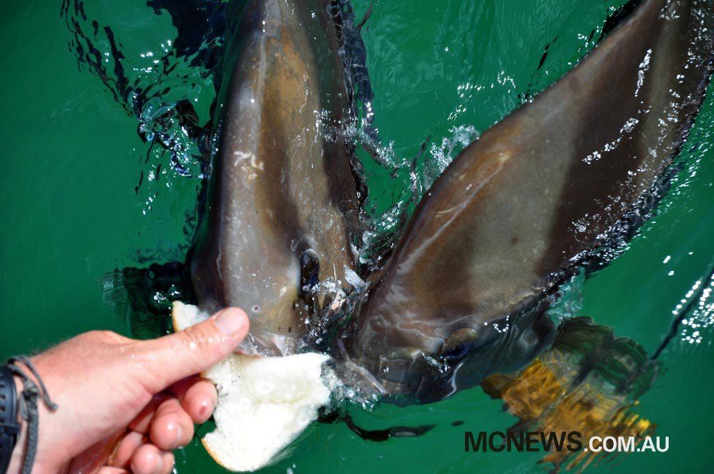 Riding Around Australia - Feeding the batfish