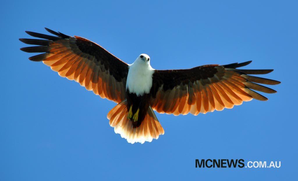 Riding Around Australia - Eagle