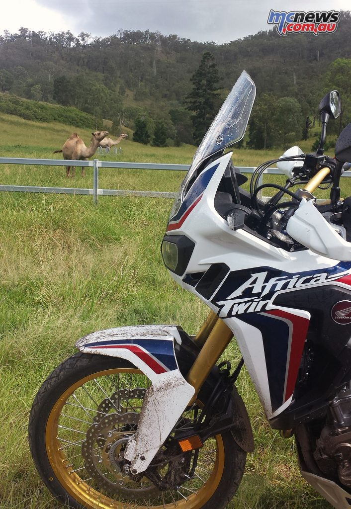 Seeing these guys seemed rather fitting on the Africa Twin