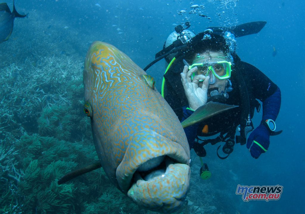 Trev scuba diving The Great Barrier Reef and getting up close and personal with a Wrasse.