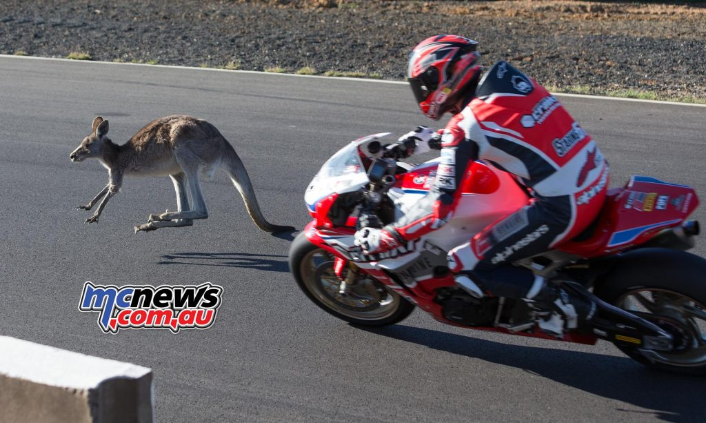 Bryan Staring clipped a kangaroo this afternoon during final qualifying for ASBK Round five at Morgan Park - Image by TBG