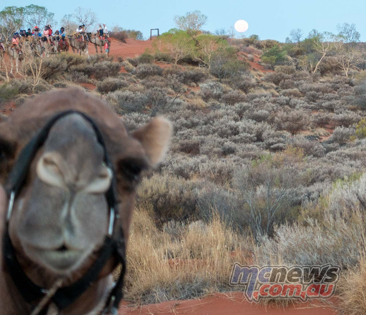 Honda Africa Twin Camel MoonRise Day